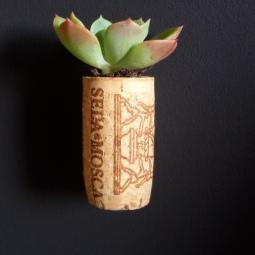Giardino verticale - Tappo in fiore