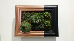 Giardino verticale - Black and copper