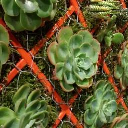 Giardino verticale - dettaglio