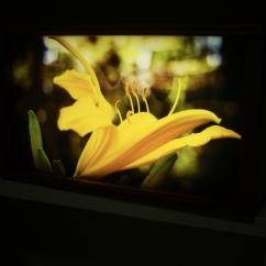 Box light - Un fiore in Etiopia