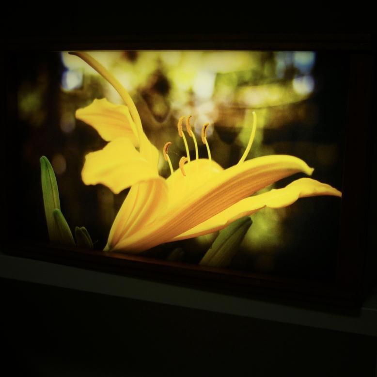 fiore etiope buio