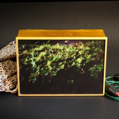 Box light - Muschio indonesiano